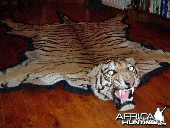 Taxidermist Van Ingen Amp Van Ingen Tiger Rug Hunting