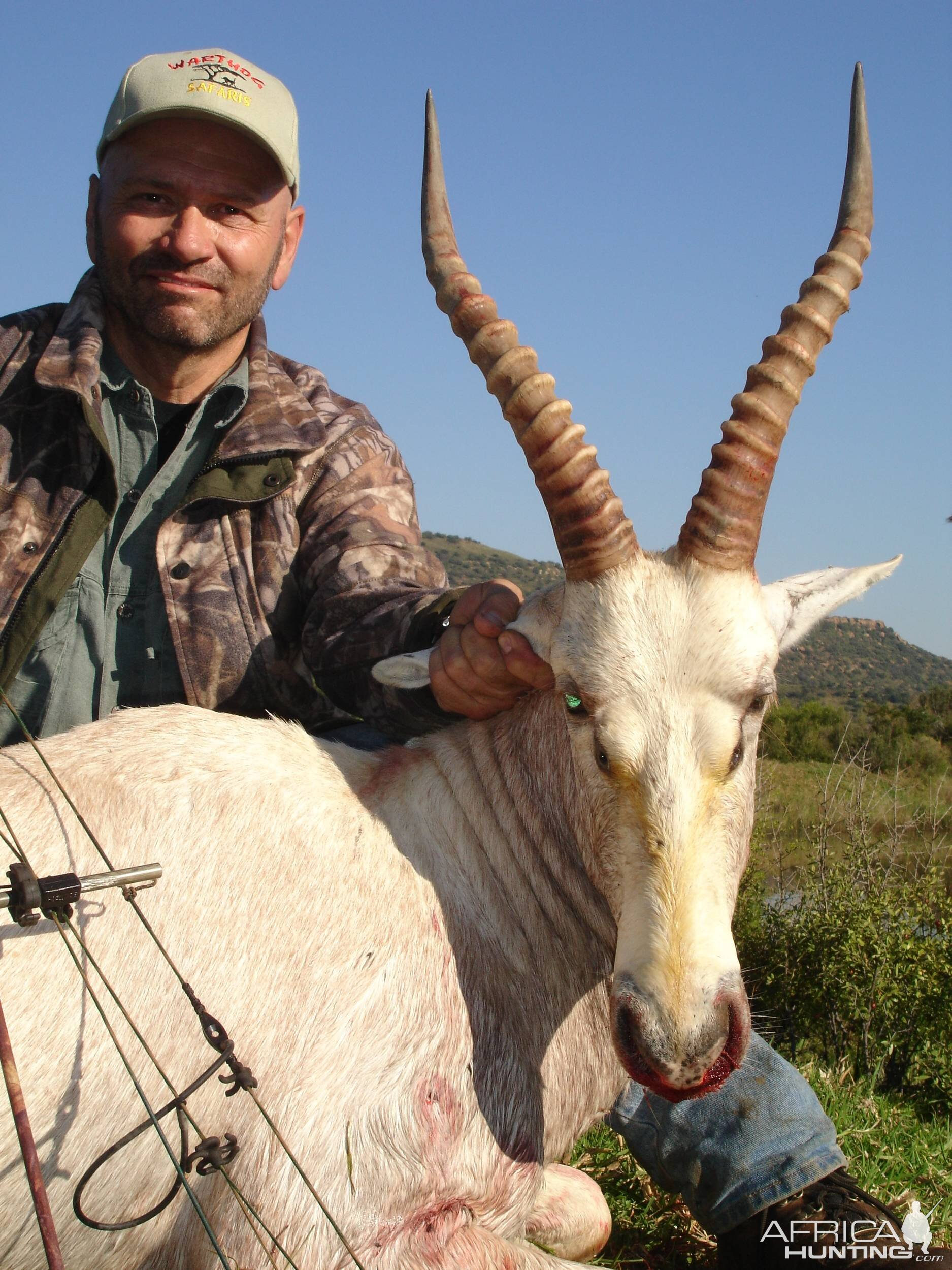 White Blesbok with bow, took with Warthog Safaris