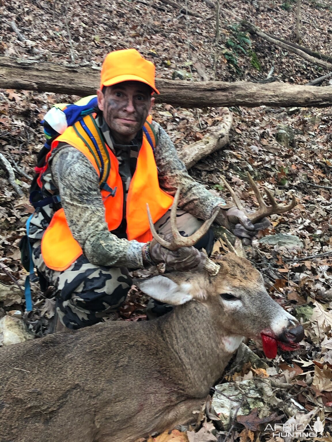 White-tailed Deer Hunt USA