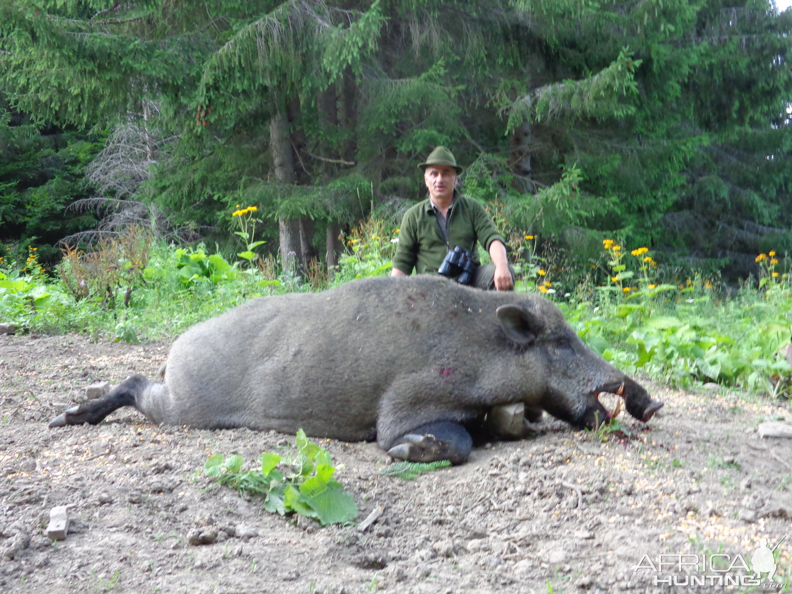WIN a FREE Hunt, Taxidermy & Sightseeing Week in Romania ... Giant Wild Boars In Asia
