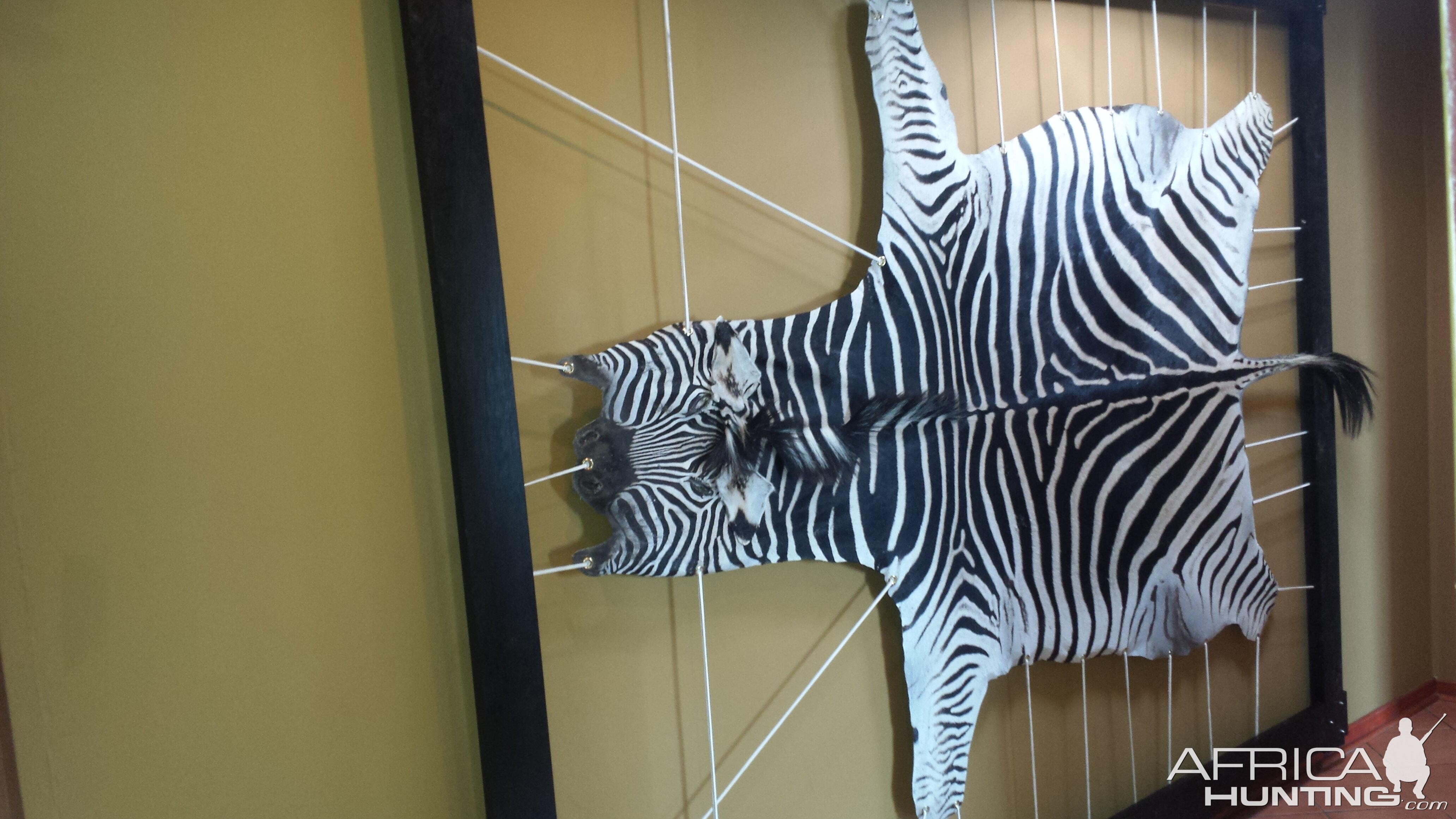 Zebra hide framed | Hunting